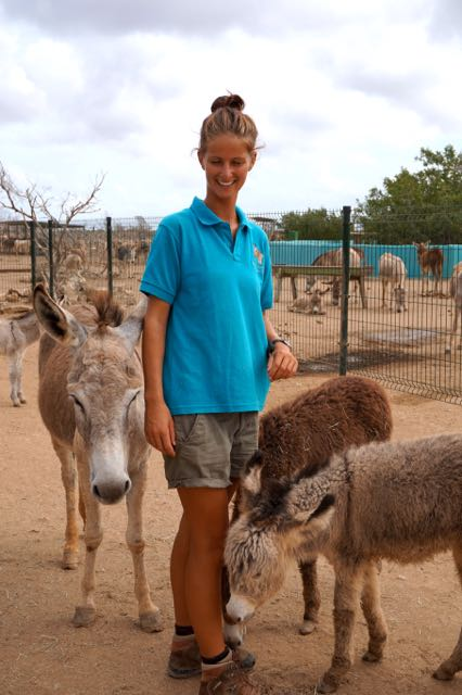 volunteer at donkey sanctuary