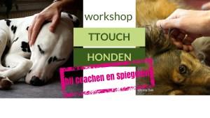 25 juni 2016  Workshop TTouch bij coachen en spiegelen