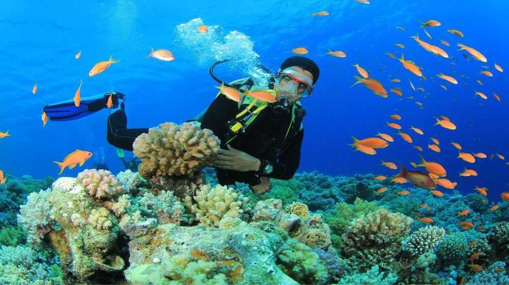 Diving to watch the coral in Quy Nhon