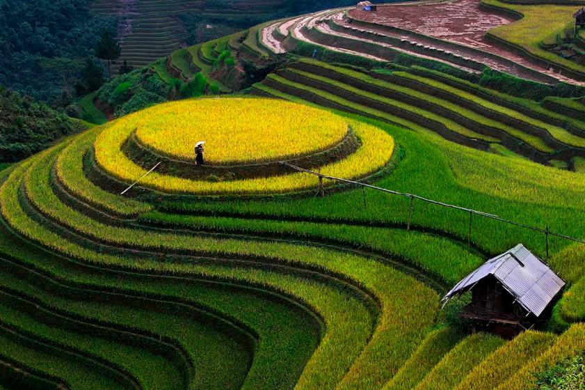 The beauty of terraced fields