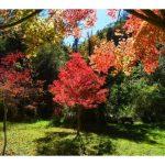 Hogsback in Autumn