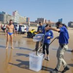 WATCH Black mamba catches a wave on Durban beach before being caught