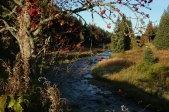 Roklansky creek