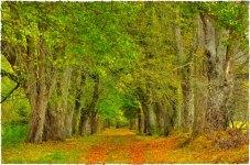 Autumn by Zelezna Ruda