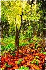 Autumn by Ceske Zleby