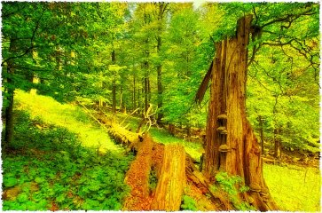An old tree by Ceske Zleby