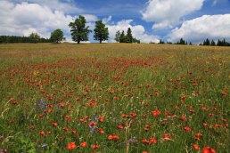 Summer meadow by Zhuri