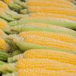 aranceles a productos agrícolas