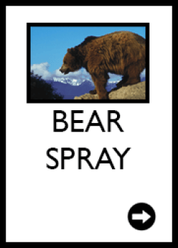 bear prsy, bear, grizzly bear, bear country, rental, for sale, west glacier, glacier national park, apgar village, lake mcdonald, for rent, for hire, service