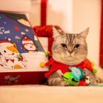 聖誕禮盒裝玩具