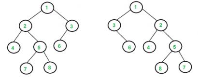 isomorohic tree