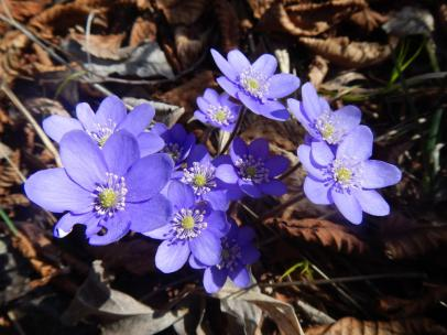br09-2014-03-15-plitvice-flora-02