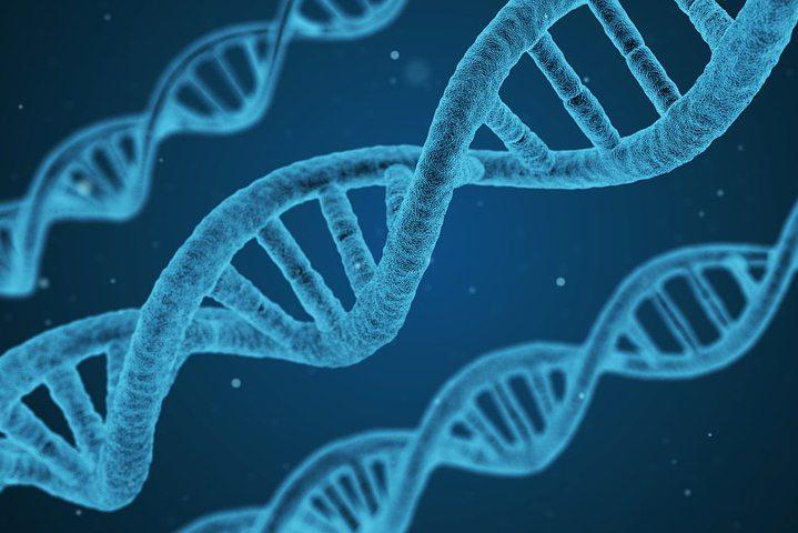 divorce genetics