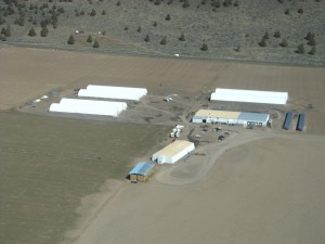 Gold Dust's packing shed, potato storage, hay shed and solar station
