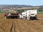 Potato trucks and potato harvester in a field