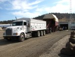 Chipping potatoes being unloaded from truck and into potato processing plant