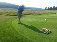 Ken Hibbard tees off with a chipping potato at Gold Dust Potato Processors' 2013 Open House Field Day golf scramble.