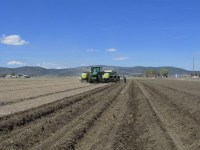 Walker Brothers' tractor and planter plant the first chipping potato field of the 2014 season.