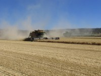Two combines harvest wheat in a field at the Running Y Ranch outside of Klamath Falls, Oregon.