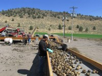 Chipping potatoes are being sorted at Gold Dust Potatoes' Malin, OR, storage facility.