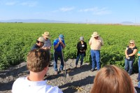 Gold Dust Potato Processors' guests inspect the Lamoka chipping potatoes MD Huffman Farms has grown near Newell, CA.
