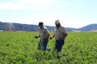 Bob Gasser and John Walker bring organic chipping potatoes from a field at the Running Y for Gold Dust's guests to inspect during the 16th Annual Open House Field Day.