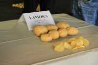 A sample of Lamoka potatoes and Lamoka potato chips on display at the Gold Dust's 16th Annual Open House Field Day.