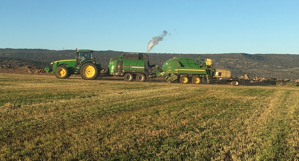 Weston Walker baling alfalfa hay with a steamer on Bill and Jan Walker's farm in Malin, Oregon.