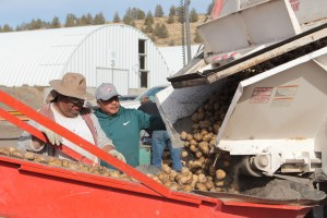 Plant Manager Salvador Vera watches an employee unload a spud truck at Gold Dust's Malin, Oregon campus.