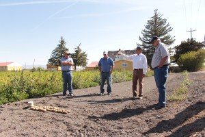 John Walker, Ed Staunton, Sid Staunton and Bill Walker in Staunton Farms' chipping potato field outside of Tulelake, CA.