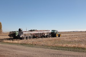 A potato bulker filling a belt trailer being pulled by a tractor in a potato field near Tulelake, California.