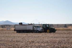A potato bulker fills a spud truck with organic chipping potatoes in a field south of Tulelake, California.