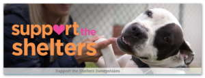 """Bissell Pet Foundation """"Support the Shelters"""" Sweepstakes"""