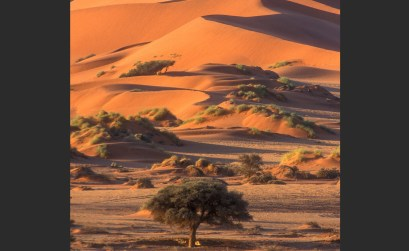 Win an Awesome Namibia Nature Photography Course