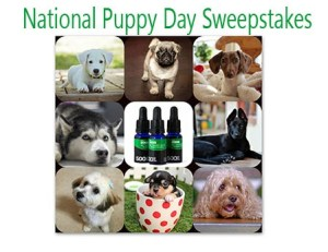 National Puppy Day Sweepstakes