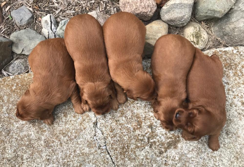 Remi's Puppies!