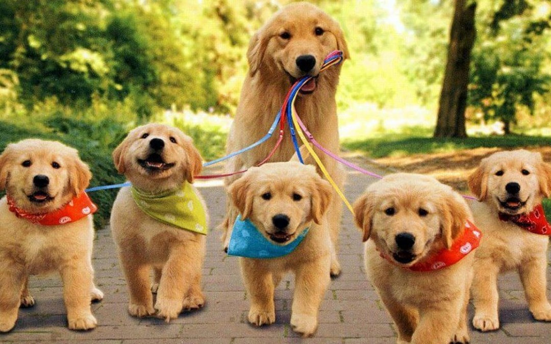Puppies – Helpful Hints