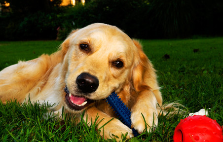 Image result for bite toys for dogs