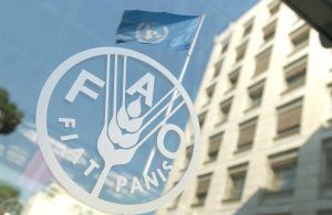 Volunteer: Food and Agriculture Organization (FAO) Volunteer Program 2021 – HQ Rome, Italy