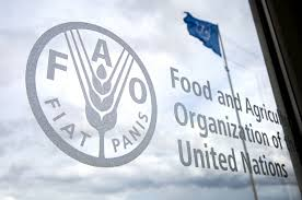 Food and Agriculture Organization (FAO) Internship Program 2021 for Undergraduate/Graduate Students – HQ Rome, Italy