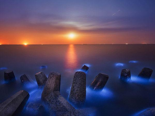 Sea Glows Blue