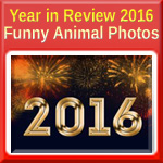 Year in Review 2016 - Funny Animal Photos