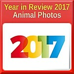 Year in Review 2017 - Best Animal Photos