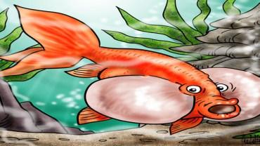bubble eye goldfish