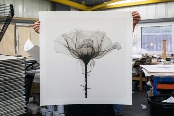 Thorns - Shok1 - 9 layer silkscreen, 2018