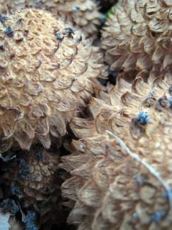 mushroom6