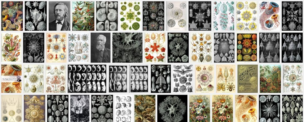 Image search for Ernst Haeckel