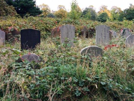 Overgrown gravestones
