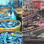 Pasca Sembonyo Ikan Melimpah dengan Harga Murah