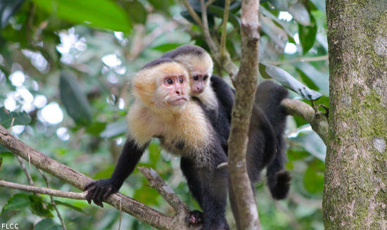 https://i2.wp.com/www.golfvacationinsider.com/wp-content/uploads/2014/03/costa-rica-monkeys.jpg